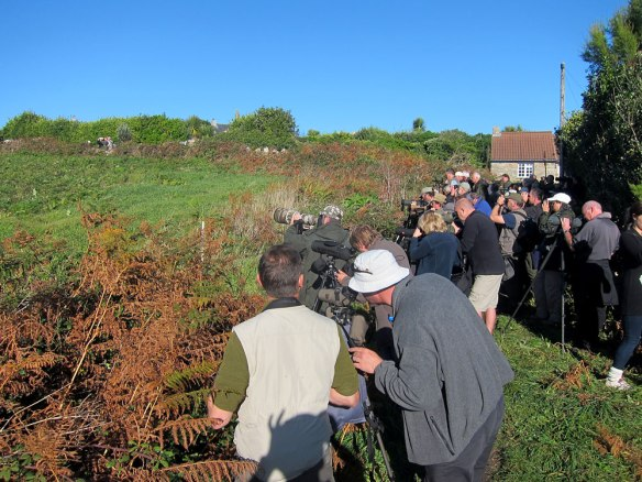 Booted-Warbler-twitchers-(2
