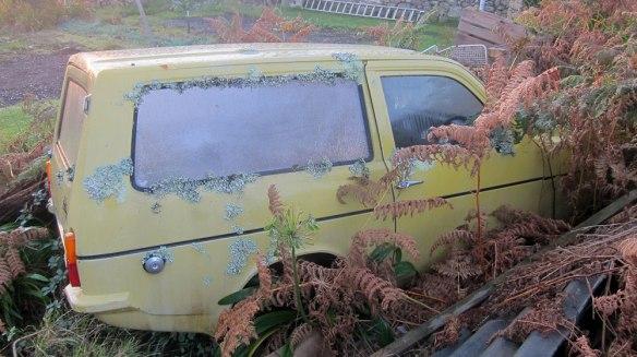 Car-&-lichen
