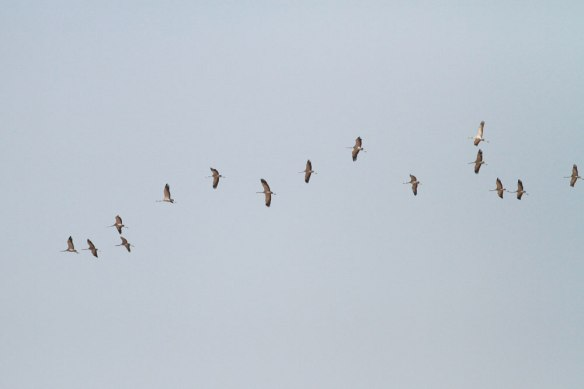 Cranes-2