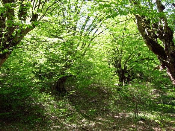 Woodlands-(3)