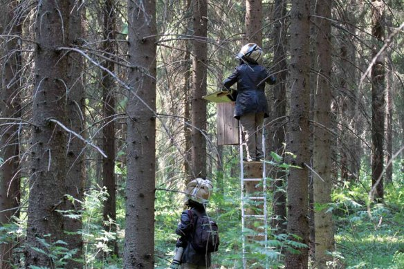Janne and Hanna at Ural Owl box (1)