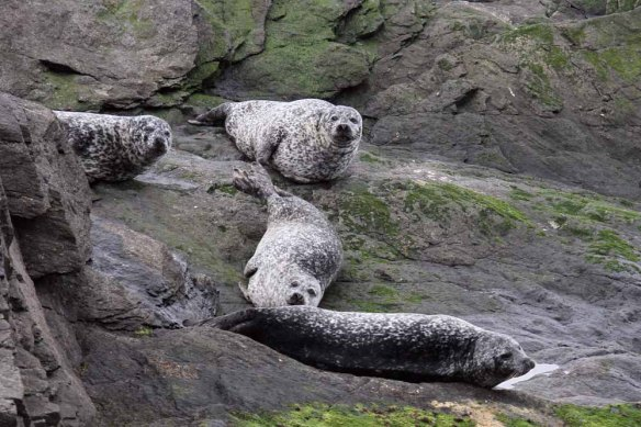 Common Seals (2)