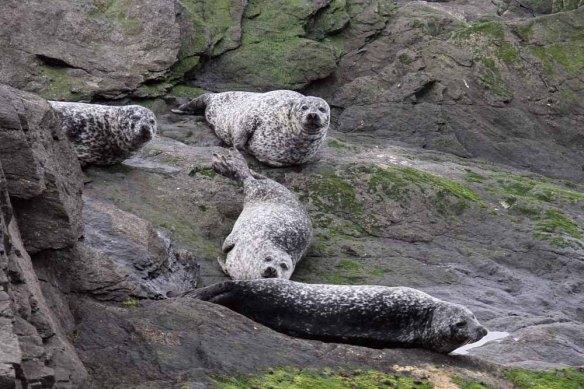 Common Seals (2)