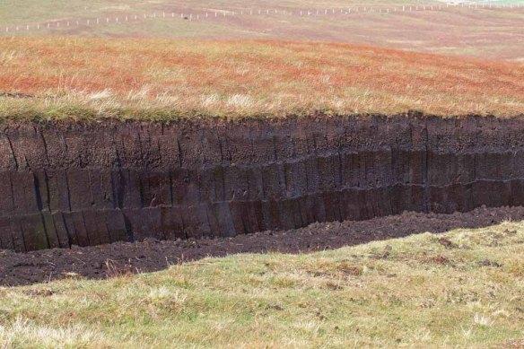 Peat cuttings (7)