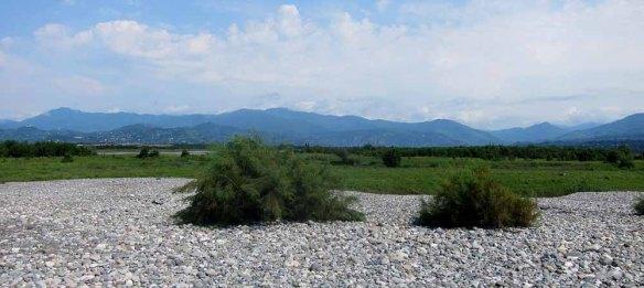 Choroki Delta (2)